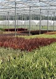 Agroleeft artikel 2